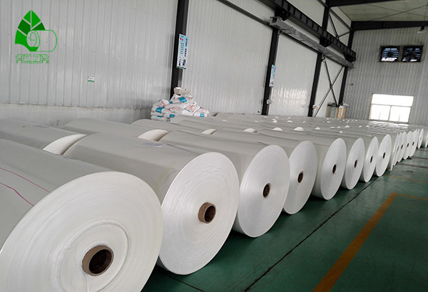 PE coated cup paper rollreel