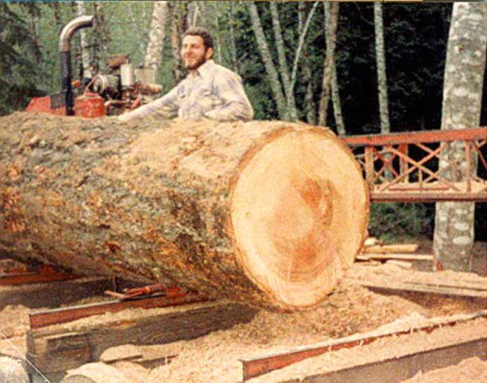 Hardwood timber logs and lumber ready for exportation