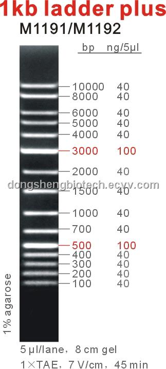 1kb Dna Ladder Plus Purchasing Souring Agent Ecvv Com
