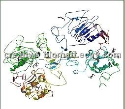 china recombinant factor market The global and china antihemophilic factor industry 2018 market research report is a professional and in-depth study on the current state of the antihemophilic factor industry in this report, the global antihemophilic factor market is valued at usd xx million in 2017 and is expected to reach usd xx.