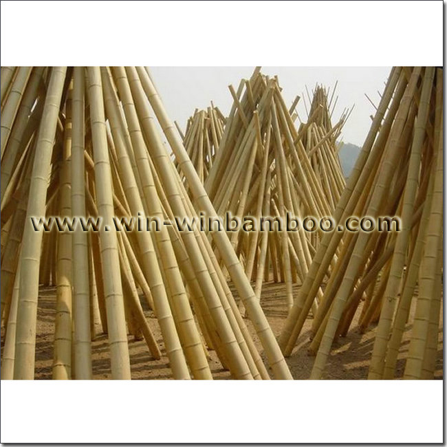 Moso nan mao bamboo poles for construction purchasing