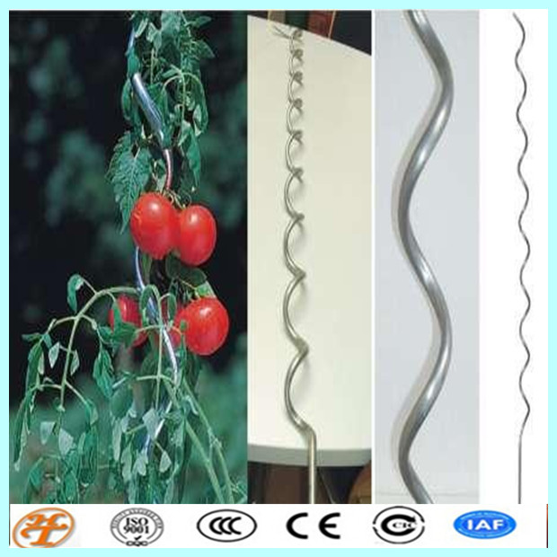 factory supply 18m galvanized plant support tomato spiral steel stakes rods