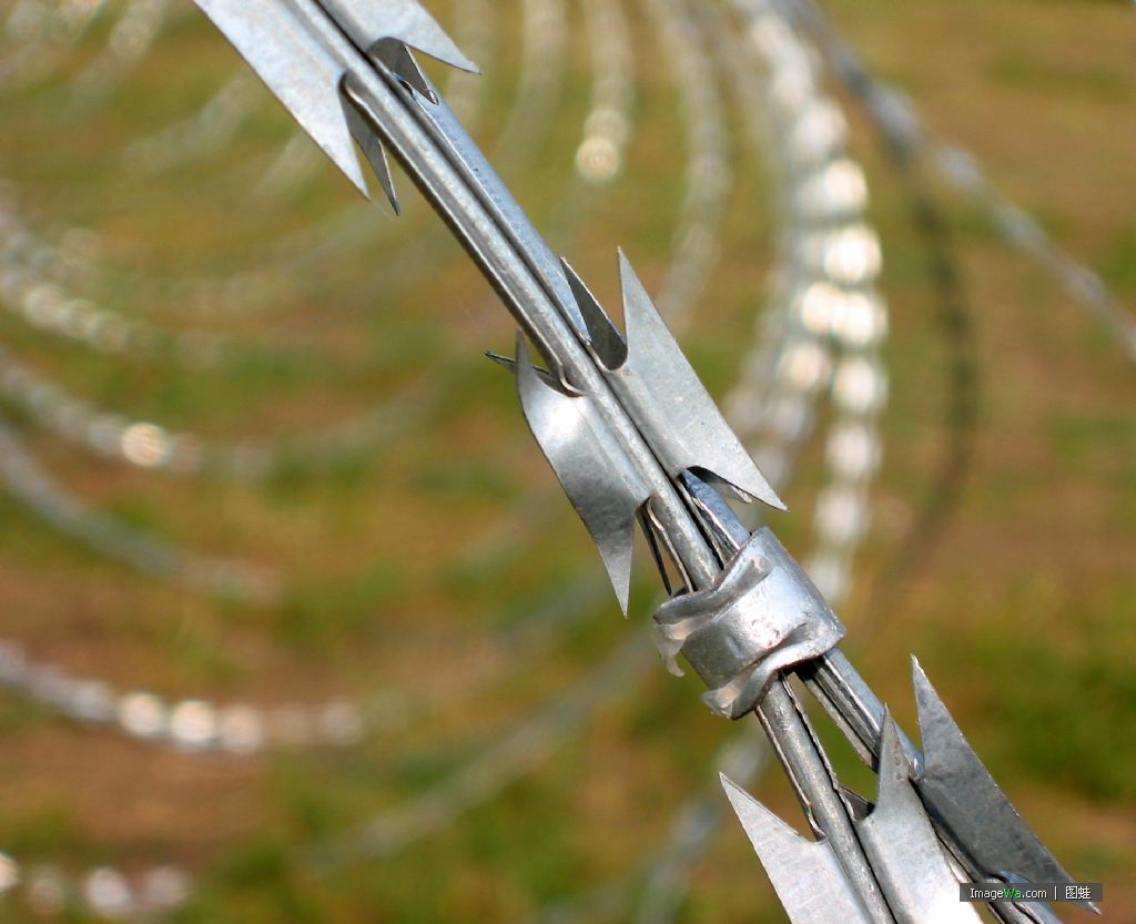 galvanized steel plate and wire Razor barbed wire