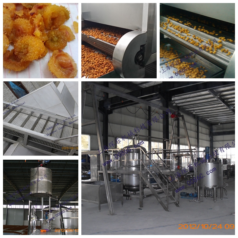 Preserved and dried fruit processing line