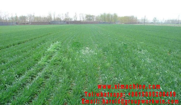 Wheat seederwheat planterwheat planter for sale