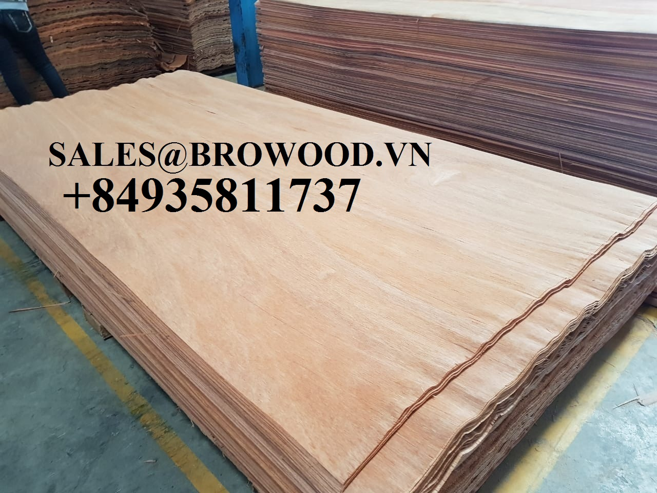 sellling eucalyptus core veneer from viet nam
