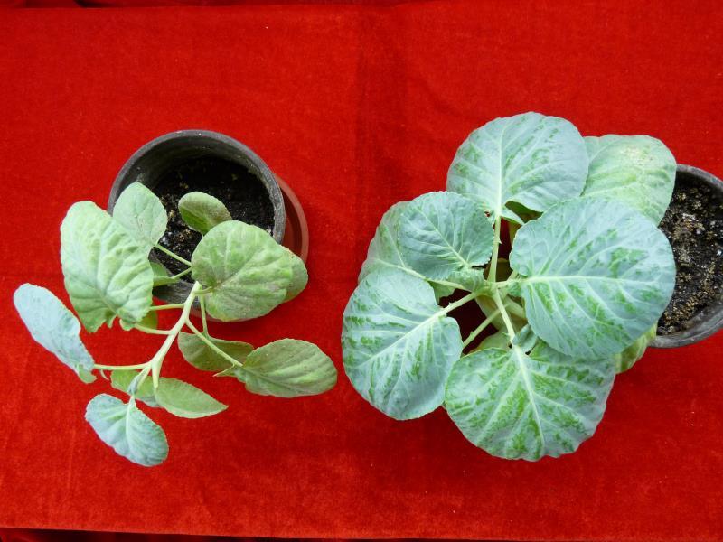 Chitosan Organic Bio Liquid Fertilizer