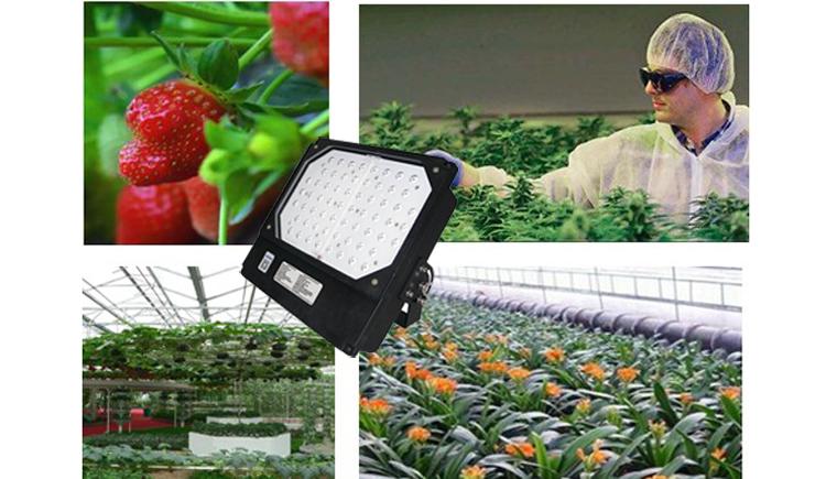 GOKANG LED plant growth lamp and plant growth light