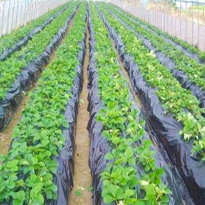 100 biodegradable plastic mulch film for agriculture and gardening agricultural films agricultural