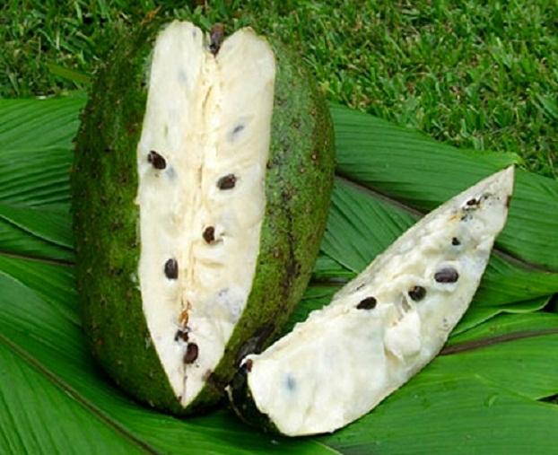 SoursopAnnona Muricata Dried Fruits Suppliers