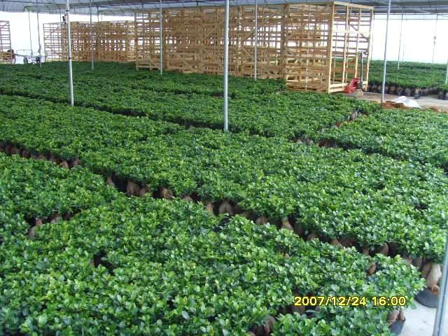 Evergreen Nursery Co Ltd
