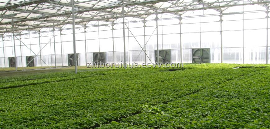 Vegetable-Growing Greenhouse (003) purchasing, souring agent | ECVV on poultry house design, raised bed greenhouse design, citrus greenhouse design, vintage greenhouse design, mushroom design, vegetable hydroponics, garden greenhouse design, vegetable gardening, vegetable flowers, high tunnel greenhouse design, strawberry greenhouse design, hydroponic greenhouse design,