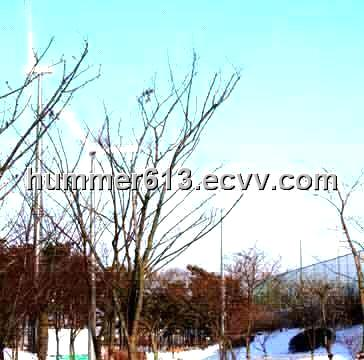 Low rotating speed 10KW wind power generator for Korea airport
