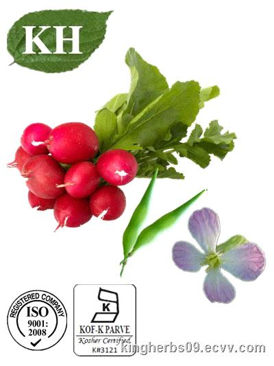 radish extract essay Search for more papers by this author k hagymási, 2nd department of medicine, semmelweis university ridha oueslati, tunisian radish extract.