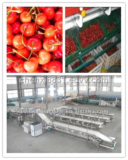 TK-G8500 HIGH CAPACITY CHERRY SIZE FRUIT GRADING PROCESSING LINE