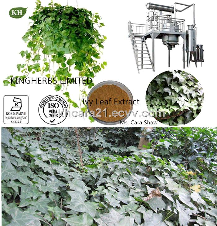 Ivy Leaf Extract Hederacosides 40%, Hederacoside C 11% by HPLC
