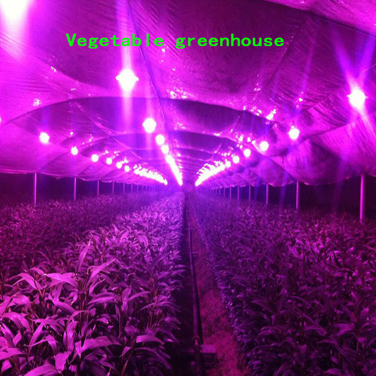 1pcs20W 30W 50W 100W  full spectrum LED plant growth illumination light source DIY modified to promote the rapid growth of plant