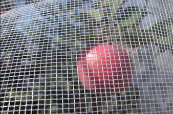 Hail Netting Protects Fruits and Vegetables from Hails
