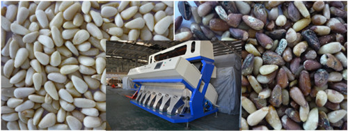 Vision Color Sorting Machine for Pine Nut&Cleaning and Processing Machinery