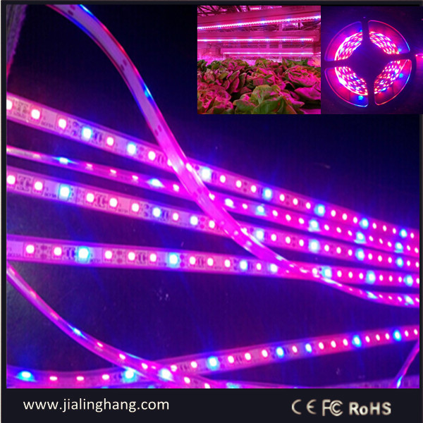 red blue LED grow strip light for mariguana