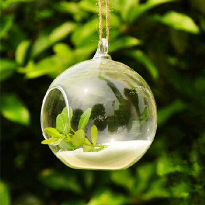 Beautiful Glass Globe Terrarium With One Open Hanging Glass Vase And