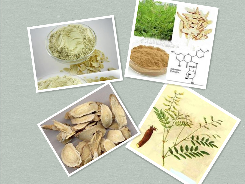 Dried Astragalus root powder ,Crude Astragalus root powder
