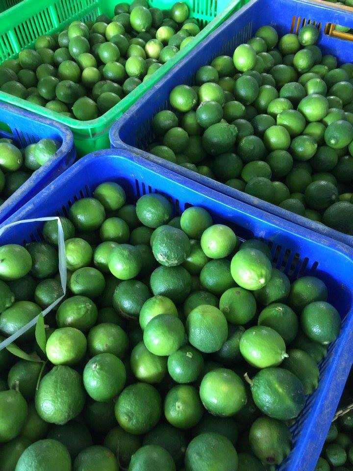 Fresh Lime Seed & Seedless