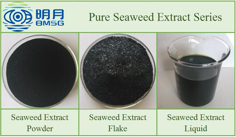 Blue Energy High Quality Soluble Seaweed Extract Powder