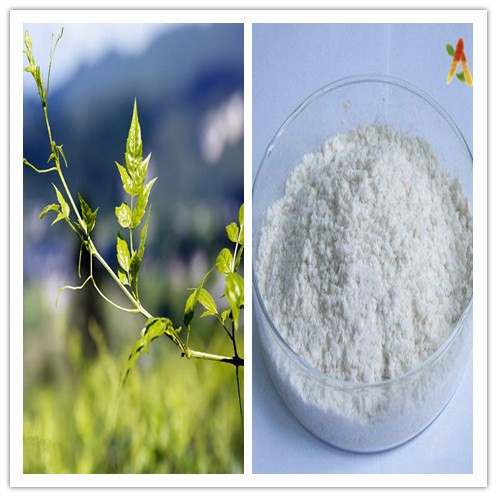 Natural Free Sample Dihydromyricetin Ampelopsin Vine Tea Extract