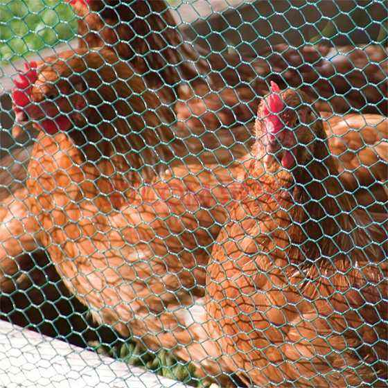 High Quality Galvanized Hexagonal Net Chicken Net