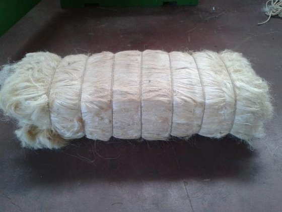 High Quality UG & SSUG Natural Raw Sisal Fiber / Sisal Fibre